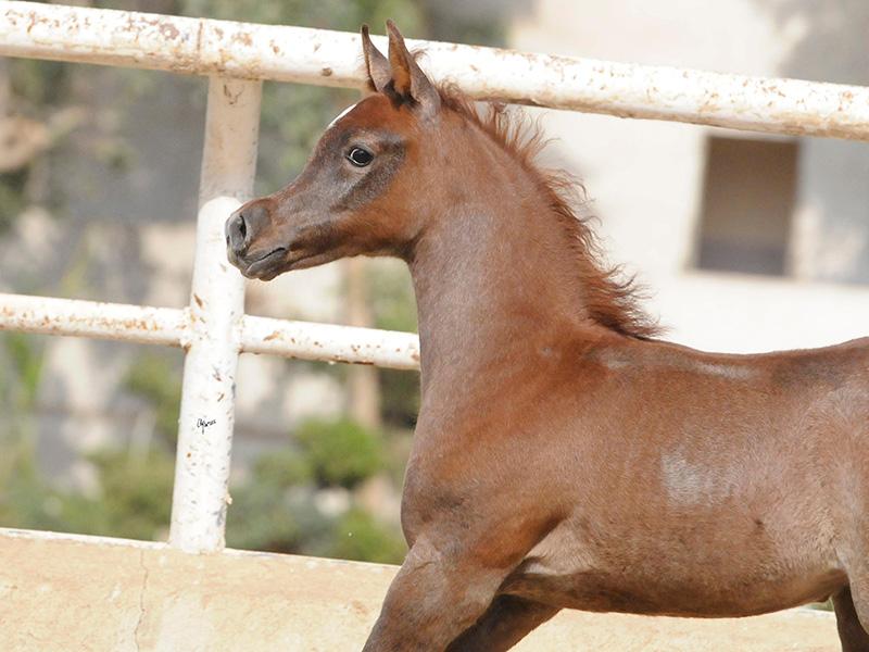 Menna Al Waly