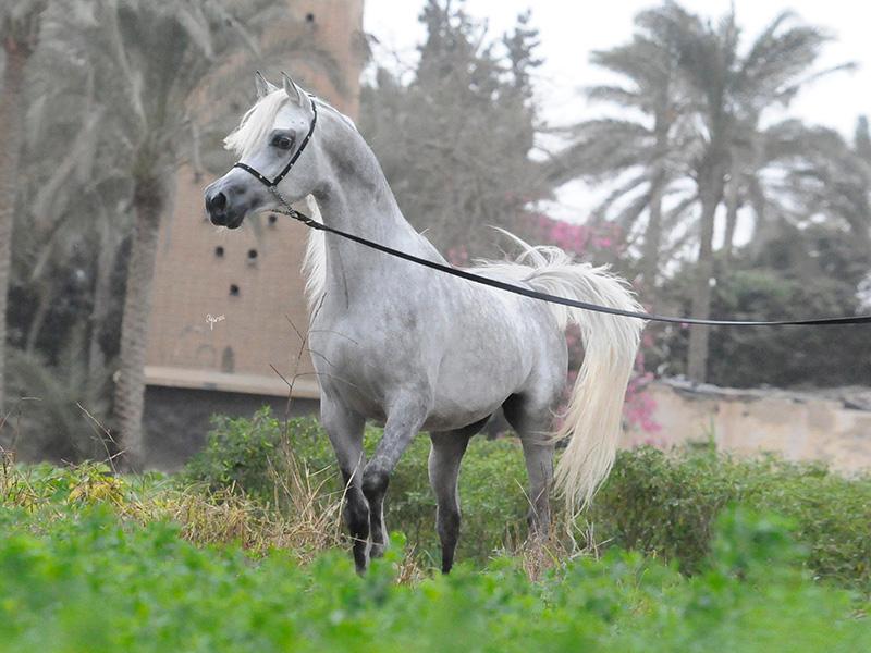 Wadi Al Bawady