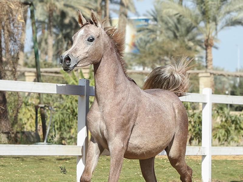 Safeera Al Ashraaf