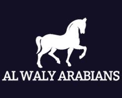 alwaly-arabians
